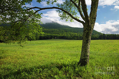 Photograph - Mt Israel - Sandwich, New Hampshire by Erin Paul Donovan