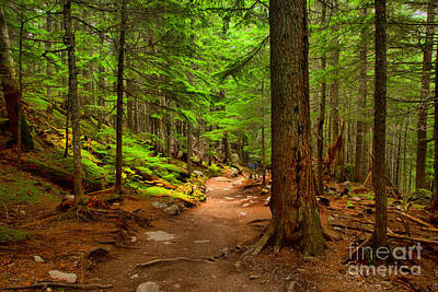 Photograph - Mt Rainier Forest Path by Adam Jewell