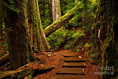 Photograph - Mt. Rainier Grove Of The Patriarchs by Adam Jewell