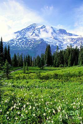Northern America Art Photograph - Mt. Rainier National Park by Greg Vaughn - Printscapes
