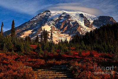 Photograph - Mt. Rainier Paradise Morning by Adam Jewell