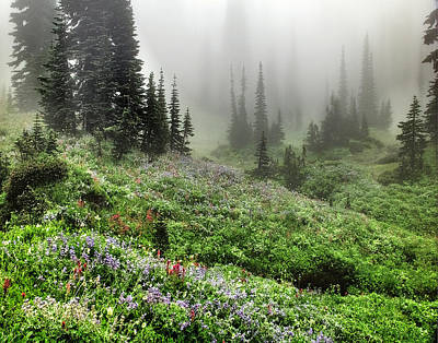 Photograph - Mt Rainier Wildflowers by Greg Sigrist