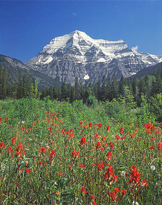 Photograph - 1m2427-v-mt. Robson With Paintbrush V  by Ed  Cooper Photography