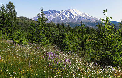 Photograph - Mt. Saint Helens In Summer by Athena Mckinzie