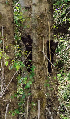 Photograph - Mt Shames Cubs by Louise Magno