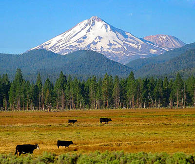 Mt. Shasta Morning Art Print