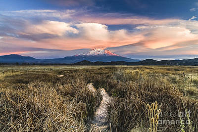Photograph - Mt Shasta by Randy Wood