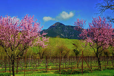 St. Helena Photograph - Mt St Helena by Garry Gay