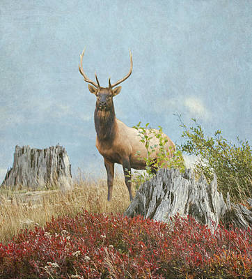 Photograph - Mt St Helens Elk by Angie Vogel