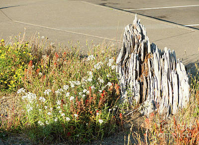 Photograph - Mount St Helens Wildflowers by Rod Jones