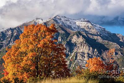 Photograph - Mt. Timpanogos Autumn - Squaw Peak Road - Wasatch Mountains by Gary Whitton