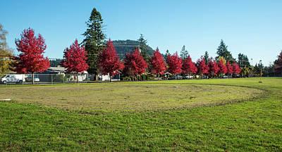 Photograph - Mt Vernon Crimson Maples by Tom Cochran