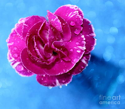 Pink Carnation Photograph - Much Love by Krissy Katsimbras