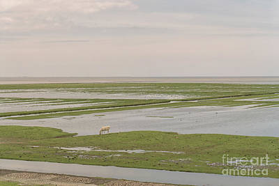 Photograph - Mud Flats In The North Of The Netherlands by Patricia Hofmeester