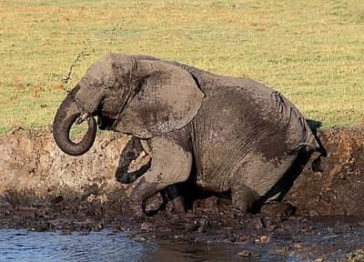 Photograph - Mud Slinging by Jennifer Wheatley Wolf