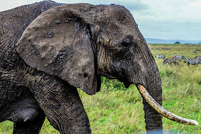 Photograph - Muddy Elephant by Marilyn Burton