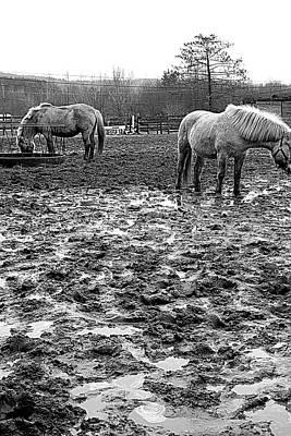 Photograph - Muddy Farm by Valentino Visentini