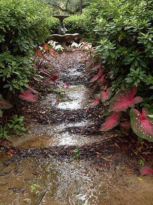 Muddy Fountain Path Art Print by Warren Thompson
