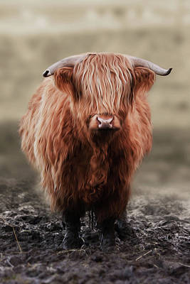 Photograph - Muddy Moo The Heilan Coo by Veli Bariskan