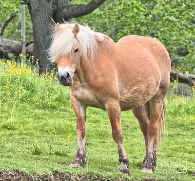 Photograph - Muddy Palomino by Debbie Stahre