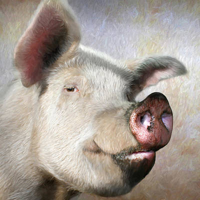 Counry Photograph - Muddy Pig Portrait by Lori Deiter