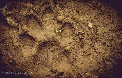 Muddy Pup Art Print