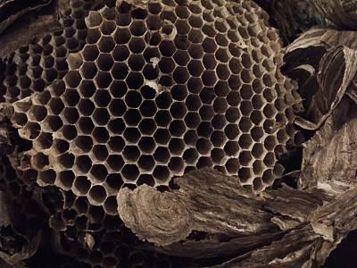 Photograph - Mudwasp Nest 6 by Anna Villarreal Garbis