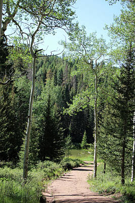 Photograph - Mueller State Park Colorado 07 by Pamela Critchlow