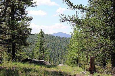 Photograph - Mueller State Park Colorado 16 by Pamela Critchlow