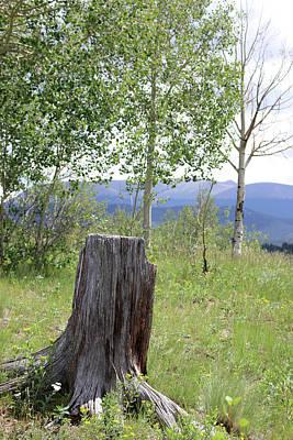 Photograph - Mueller State Park Colorado 34 by Pamela Critchlow