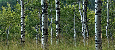 Photograph - Mug - Aspen Trees by Inge Riis McDonald