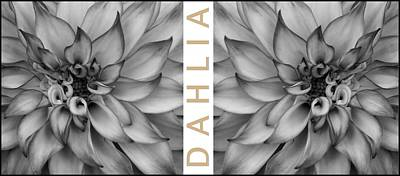 Photograph - Graphic - Dahlia Bw by Patricia Strand