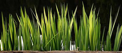 Photograph - Mug - Spring Reeds by Inge Riis McDonald
