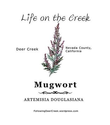 Digital Art - Mugwort by Lisa Redfern