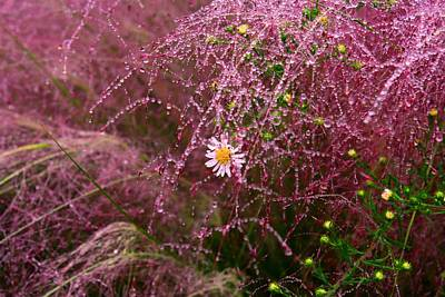 Photograph - Muhly Grass 1 by Kathryn Meyer