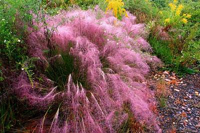 Photograph - Muhly Grass 2 by Kathryn Meyer