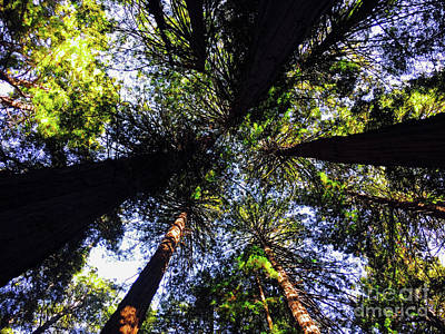 Photograph - Muir Woods - Looking Up by Jason Sullivan