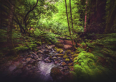 Photograph - Muir Woods No. 3 by Laura DAddona