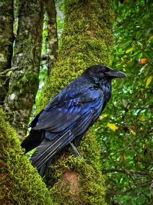 Corvid Photograph - Muir Woods Raven 001 by Lance Vaughn