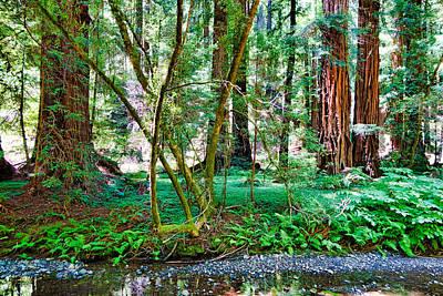 Photograph - Muir Woods Study 11 by Robert Meyers-Lussier
