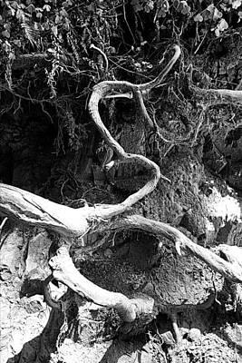 Photograph - Muir Woods Study 12 by Robert Meyers-Lussier