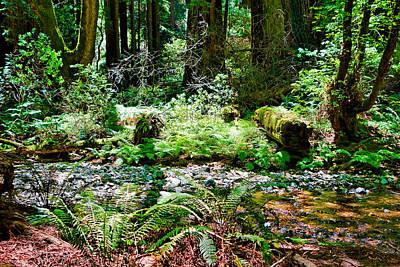 Photograph - Muir Woods Study 13 by Robert Meyers-Lussier