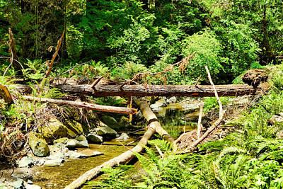 Photograph - Muir Woods Study 14 by Robert Meyers-Lussier