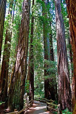 Photograph - Muir Woods Study 15 by Robert Meyers-Lussier