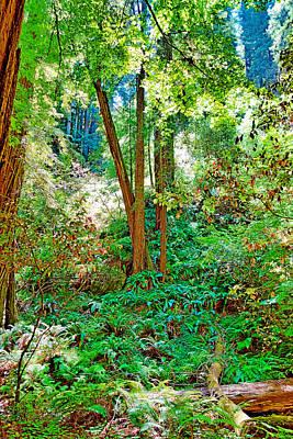 Photograph - Muir Woods Study 20 by Robert Meyers-Lussier