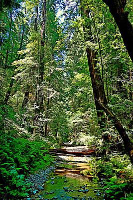 Photograph - Muir Woods Study 22 by Robert Meyers-Lussier