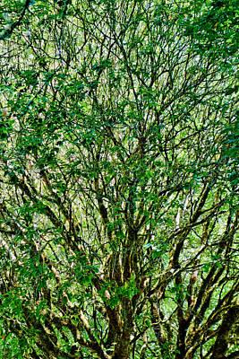 Photograph - Muir Woods Study 23 by Robert Meyers-Lussier