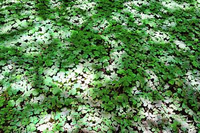 Photograph - Muir Woods Study 8 by Robert Meyers-Lussier