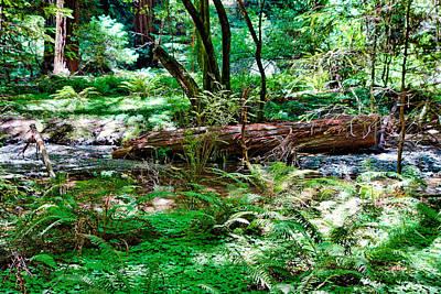 Photograph - Muir Woods Study 9 by Robert Meyers-Lussier