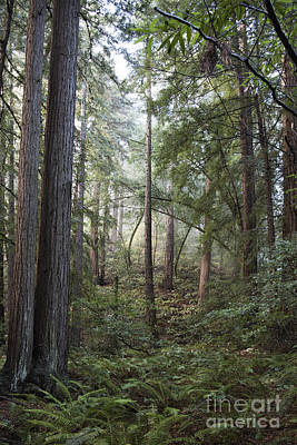 Art Print featuring the photograph Muir Woods Tranquility by Sandra Bronstein
